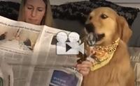 อ่านหนังสือพิมพ์นานแล้ว มา ๆ เดี๋ยวตูบช่วยอ่าน !