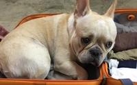 รวมภาพน้องหมาตีหน้าเศร้าหนีความผิด!!