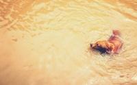 โรคน้องหมาที่มักมากับน้ำท่วมขัง (หน้าฝน)