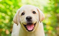 ไขความลับ .. น้องหมาใช้ใบหน้าสื่อสารกับมนุษย์ได้ไม่ใช่แค่แสดงอารมณ์ !!