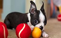 5 ของเล่นน้องหมาสุดไฮเทคที่ทาสหมาต้องมี !!