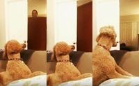 ไขข้อสงสัยจากคลิปสุดฮา ... เจ้าของแกล้งหายตัว น้องหมาไม่รู้จริง ๆ หรือว่าเจ้าของหายไป
