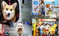 Dogilike พาตะลุย Thailand International Dog Show 2018 ตอนที่ 1