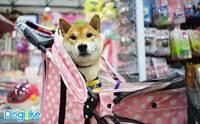 Dogilike พาตะลุย Thailand International Dog Show 2018 ตอนที่ 2