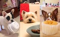 รวมภาพท่าไม้ตายน้องหมาเวลาของของกิน!