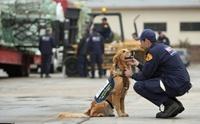 5 เหตุผลที่ต้องมีน้องหมาในงานกู้ภัย