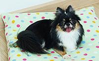 ดูแลน้องหมาแบบชิล ๆ ด้วย หมอนที่นอนสัตว์เลี้ยงซักง่าย Puppy Love Pet Pillow
