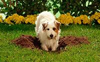 ซ่อนเก่ง!!! เคยสงสัยกันไหม ... น้องหมาขุดหลุมฝังอาหารทำไมกันนะ?