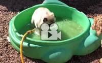 รวมคลิปสุดตลกของน้องหมากับน้ำ บอกเลยใครดูต้องขำ!