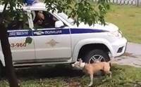 สลดใจ! ตร.ยิงสุนัขตาย หลังกัดคนที่เข้าใกล้เจ้าของเมาหมดสติ