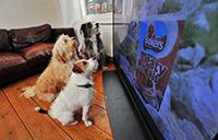 น้องหมาก็ดูทีวีรู้เรื่องได้!! รู้จัก DogTV ช่องทีวีสำหรับน้องหมาโดยเฉพาะ