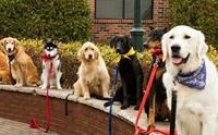5 เหตุผลที่สายจูงสำคัญกับคนเลี้ยงน้องหมาทั่วโลก