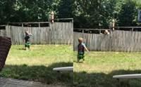 คลิปนี้ต้องดู! เมื่อเจ้าตูบข้างบ้านชวนหนูน้อยเล่นโยนลูกบอลข้ามรั้ว
