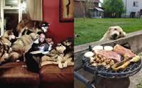 20+ ภาพชวนขำ เมื่อเจ้าของถูกน้องหมาสะกดจิตขออาหาร