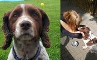 เจ้าของตามหาหมาถูกขโมย ผ่านไป5ปีคิดว่าหมดหวัง เจอเหตุน้ำตาคลอข้างถนน