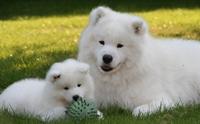 จัดอันดับ 5 สายพันธุ์น้องหมาน่ารักตั้งแต่เกิด