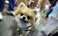 เรียนรู้การสื่อสารของน้องหมาผ่านภาษากาย