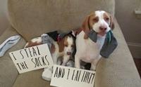 5 สิ่งของสุดงง ที่เราไม่มีทางเข้าใจว่าน้องหมาขโมยไปทำไม!!