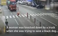 แห่ให้กำลังใจ! หญิงชาวจีนถูกรถบรรทุกชนกระเด็น ขณะช่วยชีวิตสุนัข