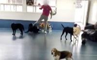 อดีตพนักงานแฉศูนย์เลี้ยงสัตว์ ทุบตีสุนัขเหมือนตกนรกทั้งเป็น (มีคลิป)