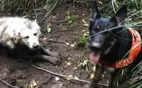 สุนัขกู้ภัยฮีโร! ช่วยชีวิตเจ้าตูบติดโคลนในป่าลำพังนาน 2 วัน