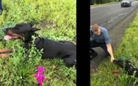 ชาวเน็ตชื่นชม ตำรวจไหวพริบดีใช้ตุ๊กตาล่อสุนัขที่พลัดหลงบนทางหลวง!