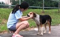 จัดอันดับ 5 สิ่งที่หมาจรชอบทำเวลาเจอคนรักหมา