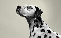 5 สุนัขพันธุ์ที่ถูกลืม!! ในบ้านเรา
