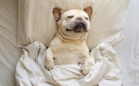 ท่านอนน้องหมาบอกภาวะอารมณ์ได้นะ รู้ยัง?