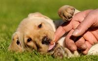 หมาเด็ก(มา)ใหม่ ต้องรับมือยังไงถึงจะเอาอยู่