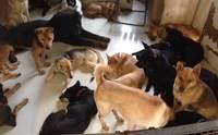 ศูนย์พักพิงฯ สัตว์ในฮ่องกงเจอฤทธิ์ซุปเปอร์ไต้ฝุ่น �มังคุด� ประกาศหาคนดูแลสุนัข 18 ตัว