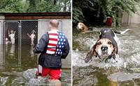 คลิปนาทีช่วยชีวิต 6 สุนัขถูกทิ้งจมน้ำ หลังเจ้าของอพยพหนีเฮอร์ริเคนฟลอเรนซ์