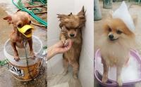 รวมภาพสุดคิ้วท์ เมื่อน้องหมาถูกจับอาบน้ำ
