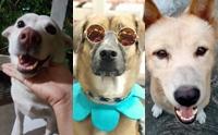 รวมภาพน้องหมาพันทางสุดน่ารัก #ทีมหมาจร