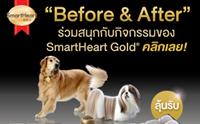 SmartHeart Gold ชวนโพสต์ภาพถ่ายน้องหมาคู่กับถุงอาหารรับของรางวัลสุดพิเศษ !