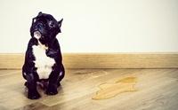 ระวัง!! สุนัขปัสสาวะมากสัญญาณเตือนโรคเบาจืด