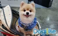 Dogilike พาคนรักน้องหมาขาช้อปตะลุย Pet Variety ปีที่ 8