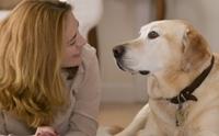3 ขั้นตอนง่าย ๆ ฝึกน้องหมาให้เข้าใจภาษาคน