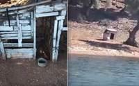 หมาแมวถูกทิ้งอยู่บนเกาะจนใกล้ตาย โชคดีมีคนเห็นช่วยเหลือทัน !
