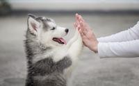 จัดอันดับ 5 พฤติกรรมที่น้องหมาชอบทำเหมือนคน