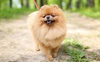 แจกโปรแกรมดูแลน้องหมาให้น่ารักง่าย ๆ ภายใน 7 วัน