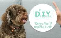 D.I.Y. ฝึกหมา Alert ให้นั่งคอยได้ใน 3 นาที