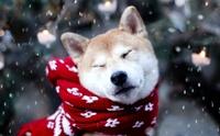 เตรียมรับมือ!! โรคน้องหมาที่มากับหน้าหนาว