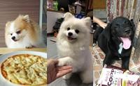 รวมภาพน้องหมาขี้อ้อนขอของกิน