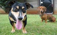 แชร์เลย! 3 ทริค รับน้องหมา(จร)ตัวใหม่เข้าบ้านยังไง ไม่ให้ตูบตัวเก่าดราม่า