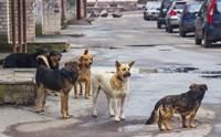 จัดอันดับ 5 เรื่องที่คนมักเข้าใจผิดเกี่ยวกับสุนัขจรจัด !
