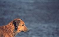 เรื่องจริงสุดเศร้าที่คุณไม่รู้เกี่ยวกับสุนัขจรจัด