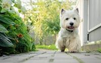 รวมสายพันธุน้องหมาขนขาว ที่สาวกรี้ดมากที่สุด