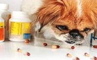 ยาคนกับยาสัตว์ต่างกันอย่างไร