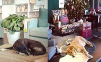 IKEA อิตาลีเปิดประตูให้หมาจรฯ เข้ามาหลบหนาว แต่มันไม่ได้จบแค่นั้น! (คลิป)